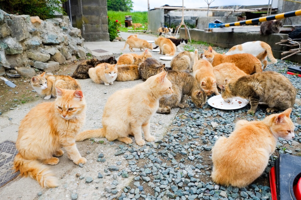 A large group of cats eating on Cat Island.