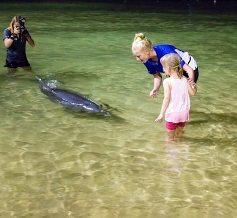 A little girl feeds a dolphin.