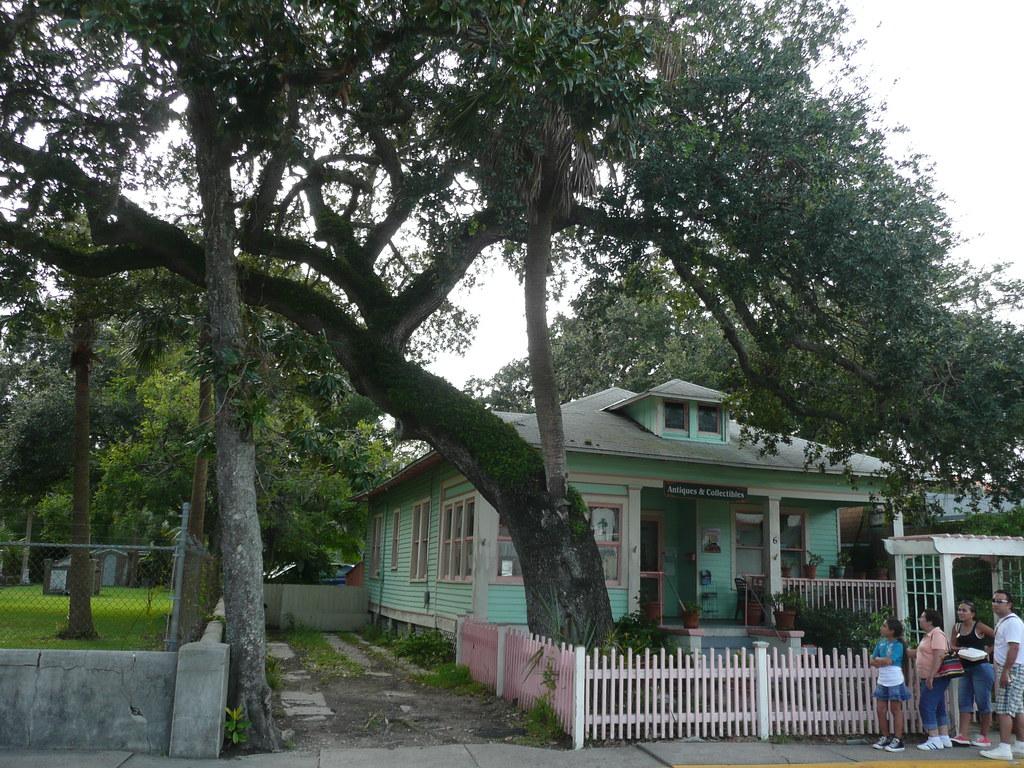A Love Tree in Saint Augustine.