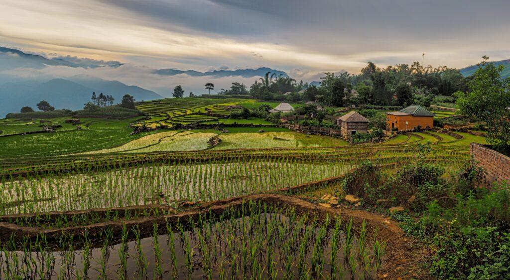 A lush farm in Vietnam