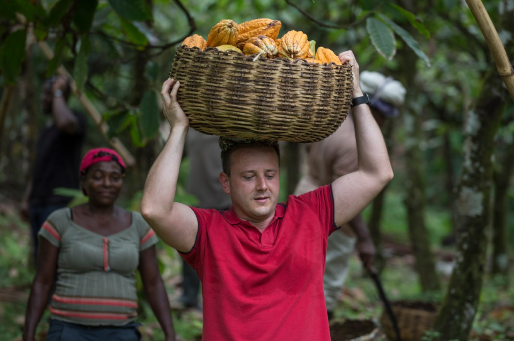 A man helping to harvest cacao pods.