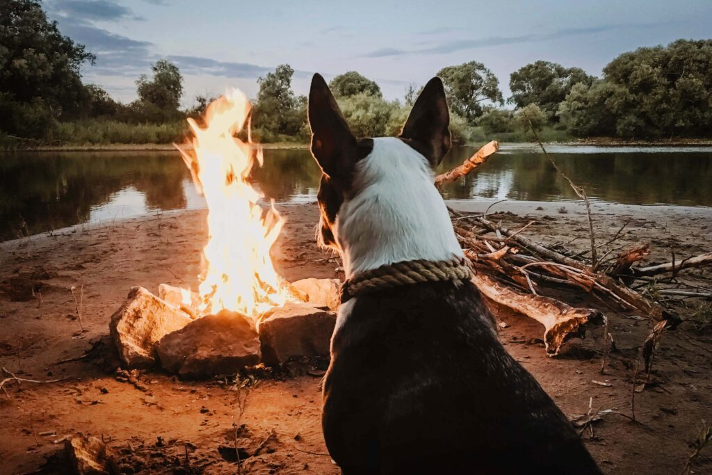A medium sized dog looking at a campfire