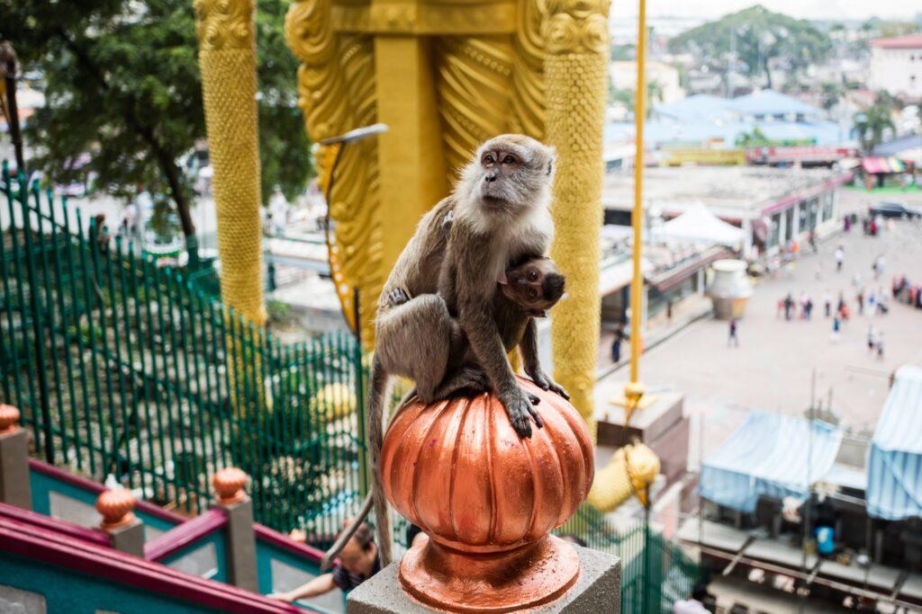 A monkey at the Batu Caves.