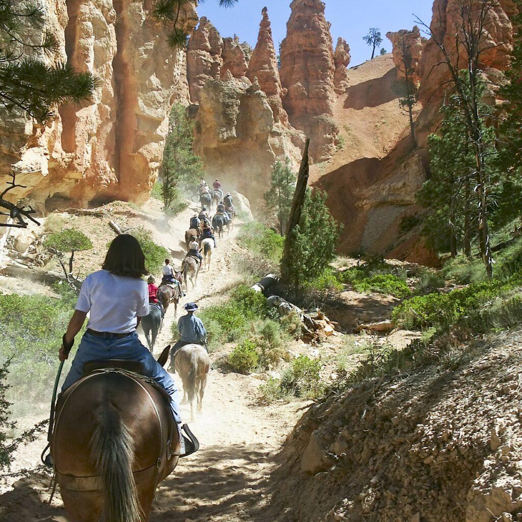 A mule ride through Bryce Canyon.