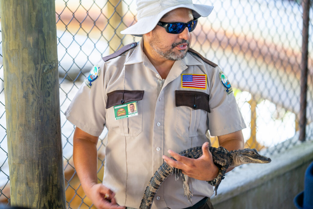 A park ranger holding a young alligator.