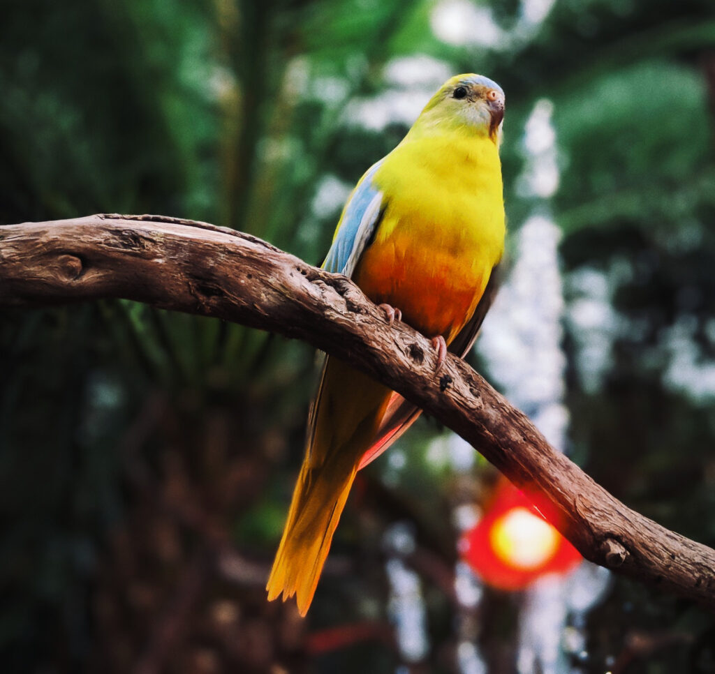 A parrot inside Bloedel Conservatory