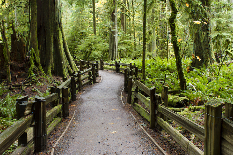 A path through Cathedral Grove in MacMillan Provincial Park.