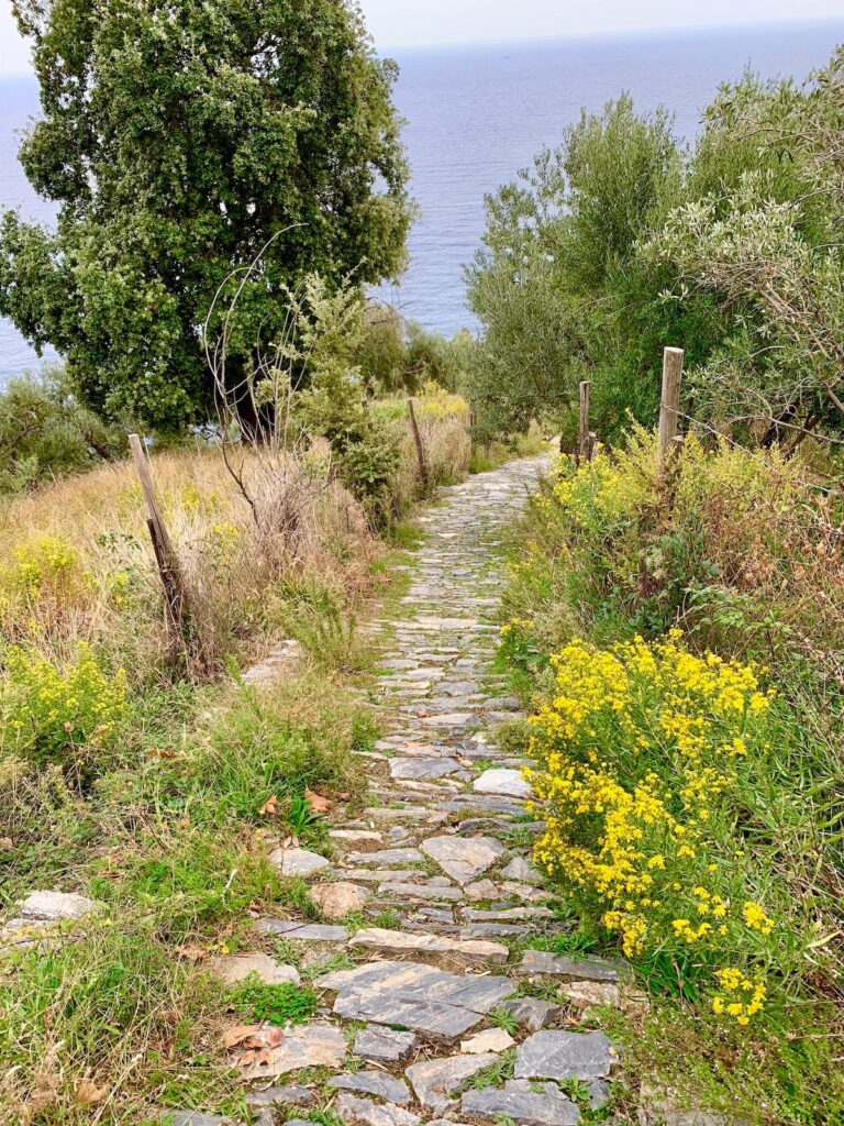A path to a beach in northern Greece.