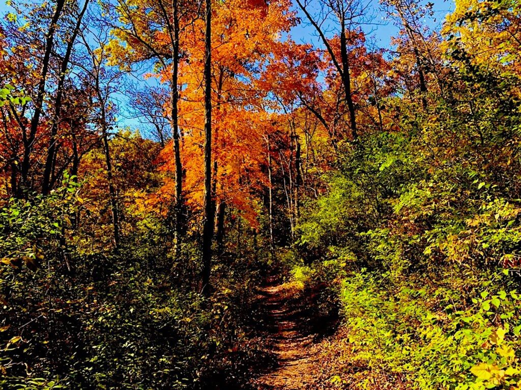 A portion of the Ice Age Trail during the fall.