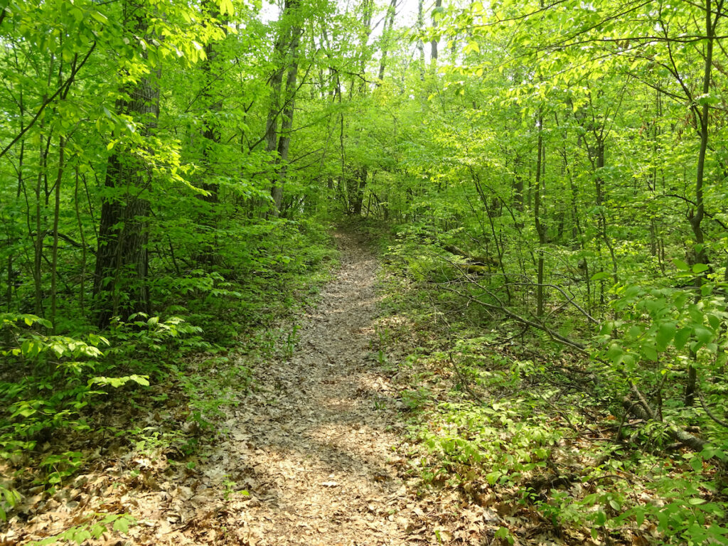 A portion of the Ice Age Trail in Wisconsin.