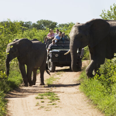 A private safari in South Africa's Kruger National Park.