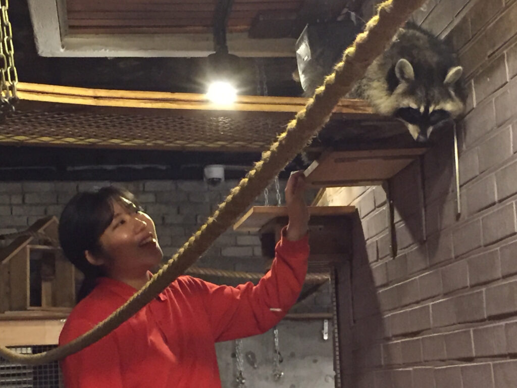 A raccoon at Blind Alley Cafe in Seoul.