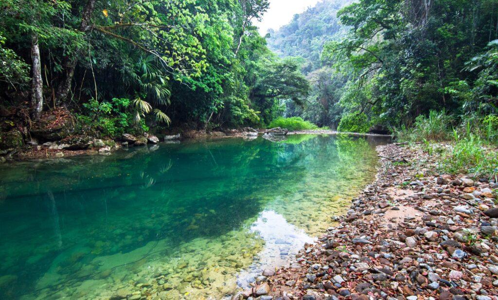A river along a rainforest trail in Belize.