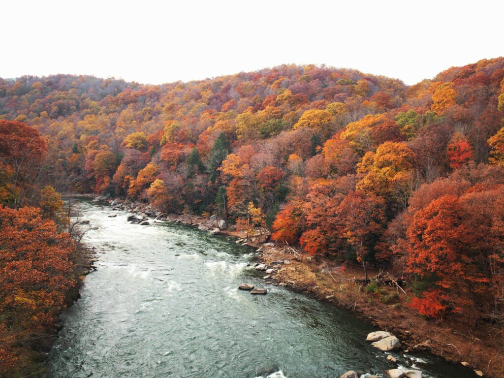 A river surrounded by the brightly colored orange and red trees of the Allegheny Mountains in fall