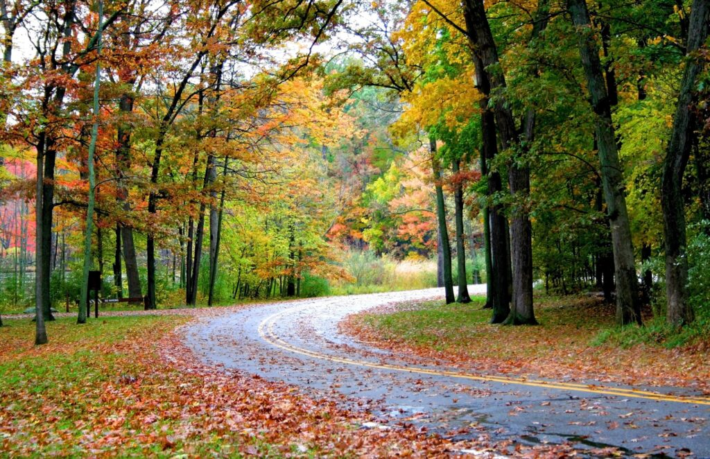 A road along Michigan's Gold Coast in the fall.