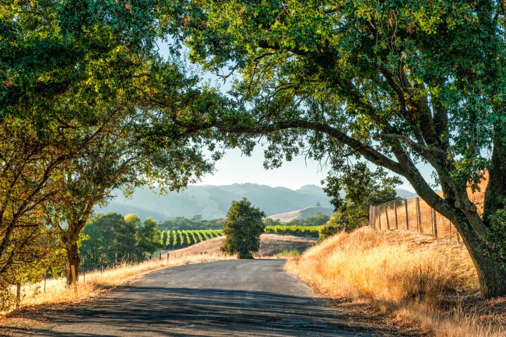 A road in Sonoma Valley.