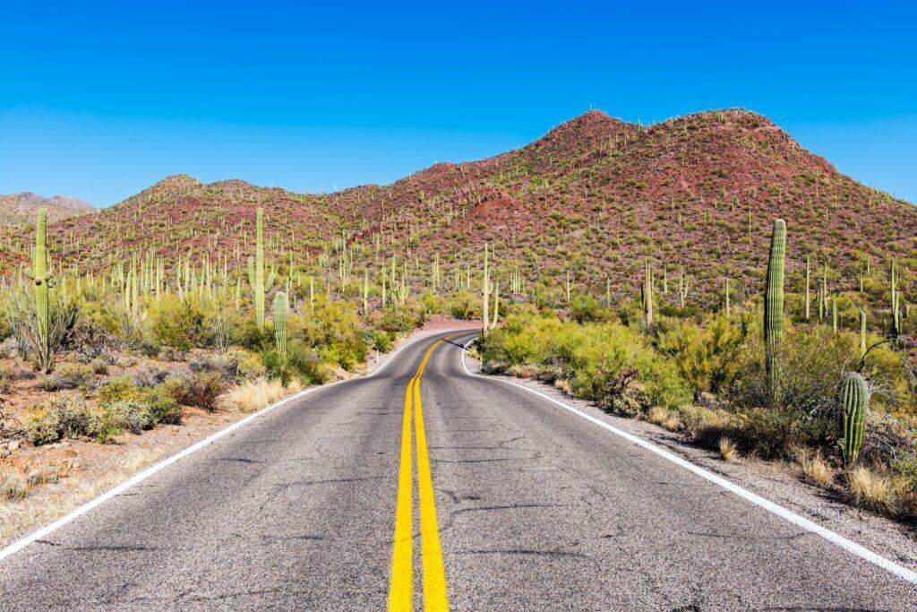 A road through Saguaro National Park.