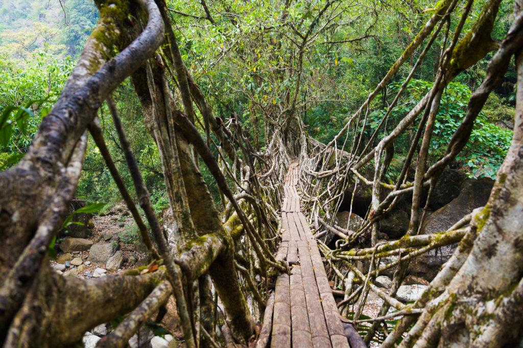 A root bridge in India.