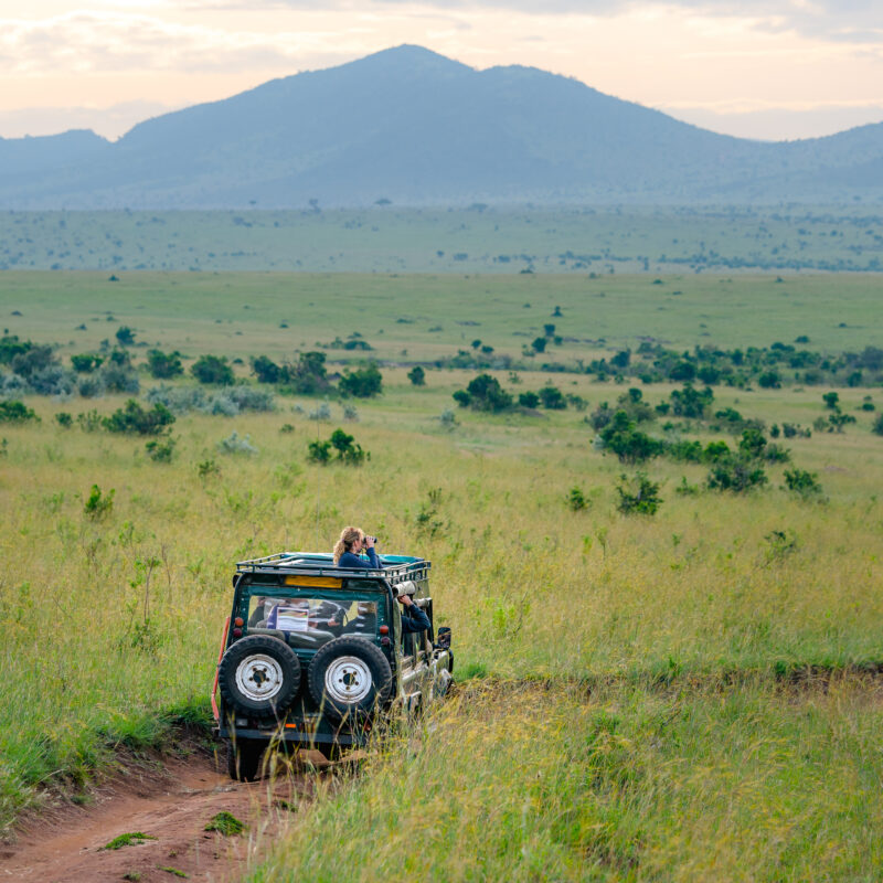 A safari at Serengeti National Park in Africa.