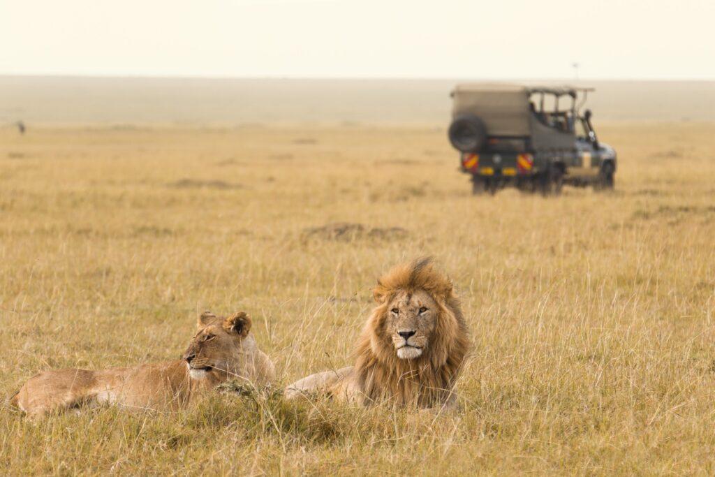 A safari in Maasai Mara, Kenya.