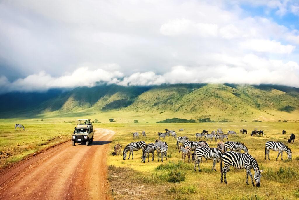 A safari in Ngorongoro Crater National Park in Tanzania.