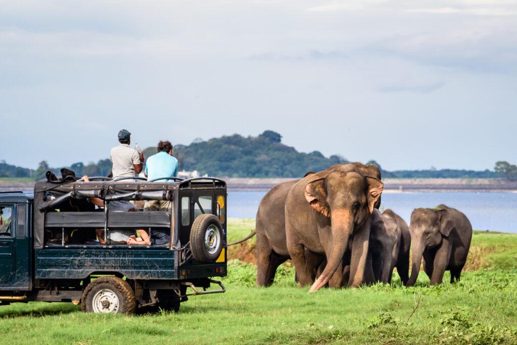 A safari in Yala National Park.