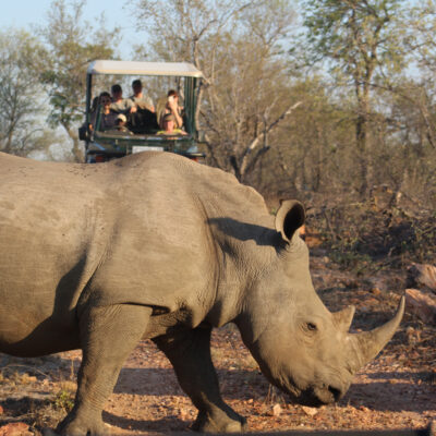 A safari tour of Kruger National Park.