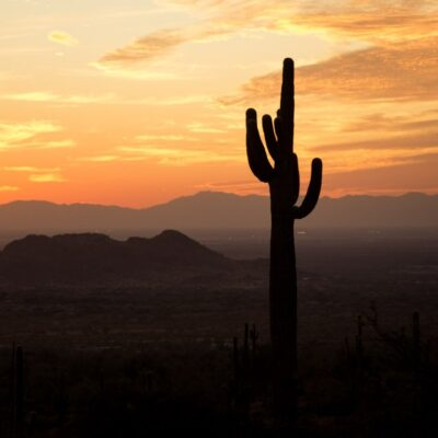 A saguaro cactus at sunset in Phoenix, Arizona.