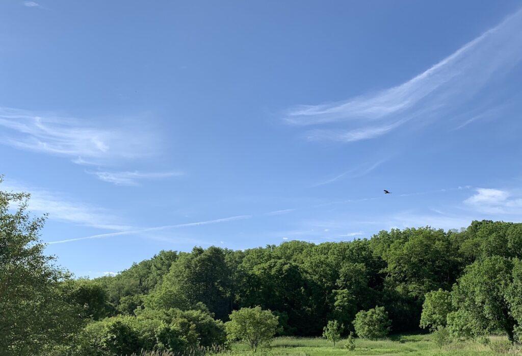 A sandhill crane in Wisconsin.