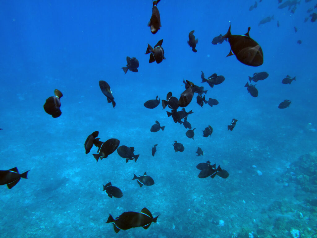 A school of fish at Molokini Crater.