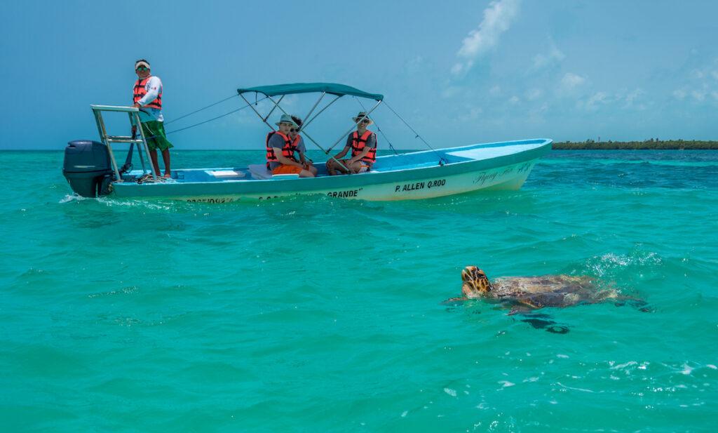 A sea turtle off the coast of Tulum, Mexico.