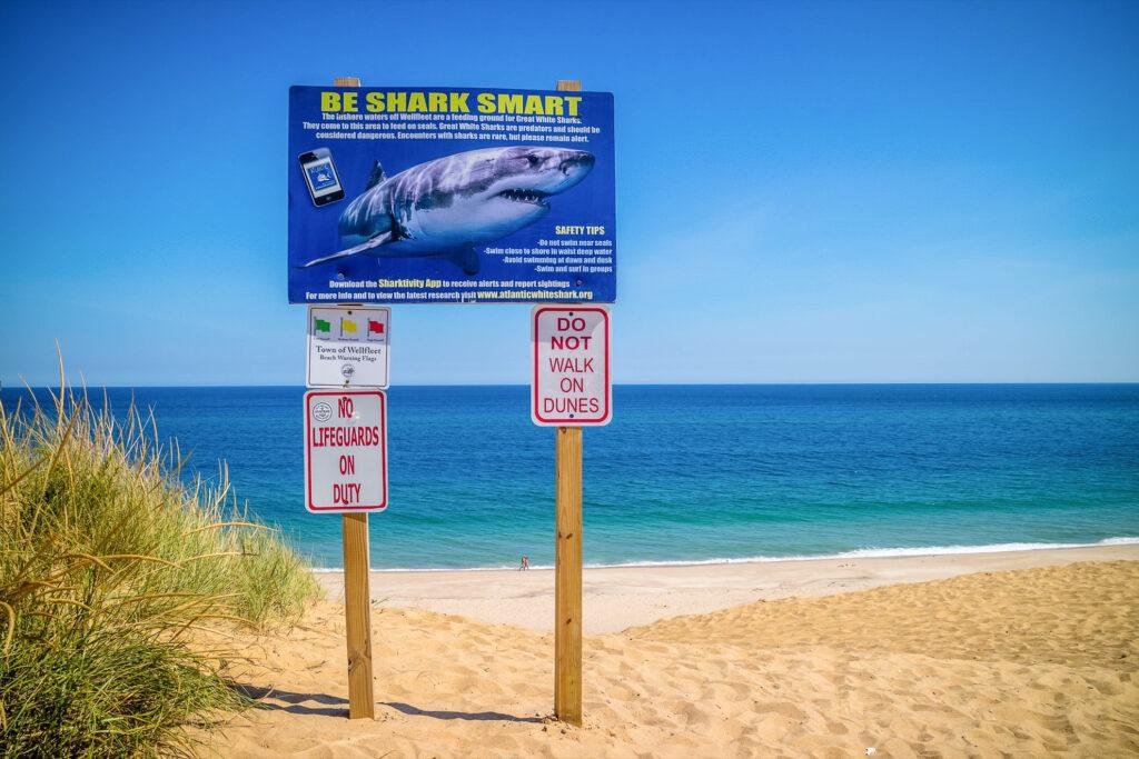 A shark warning on a Cape Cod beach.