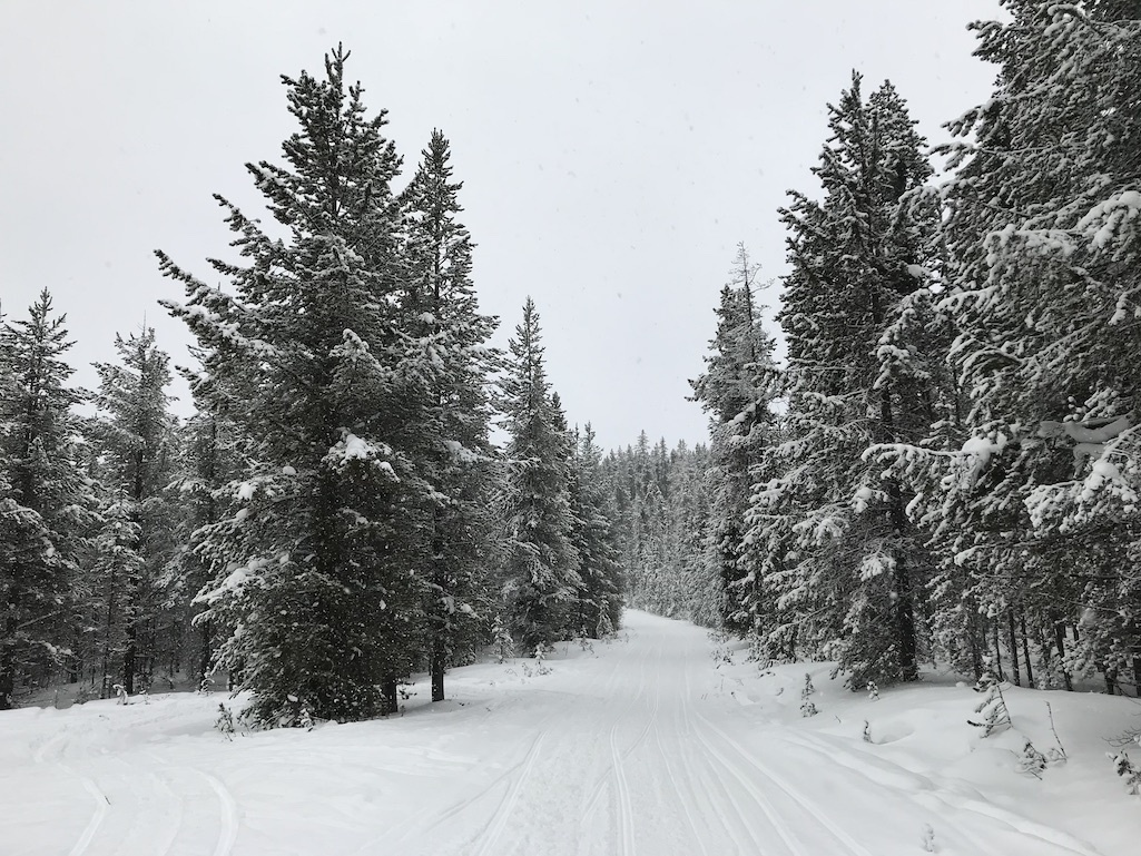 A snowmobiling trail through the woods.
