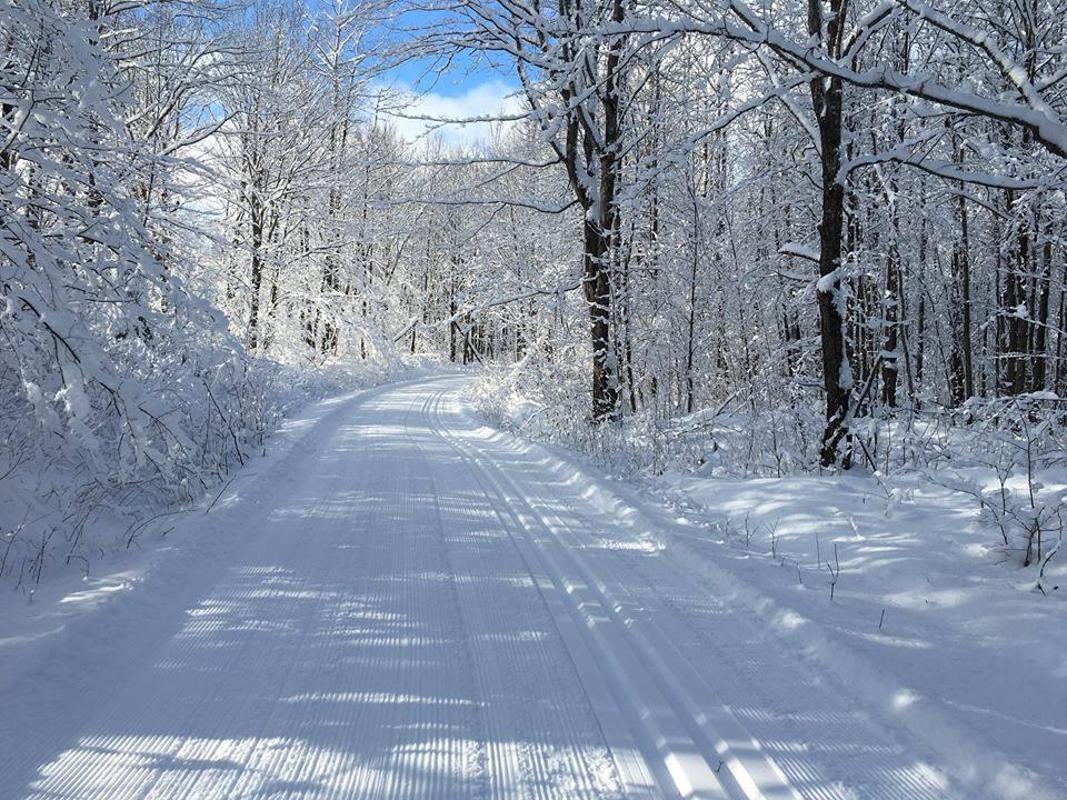 A snowy trail in Bayfield County.