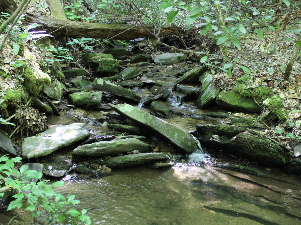 A spring of water along the Pinhoti Trial in Alabama.