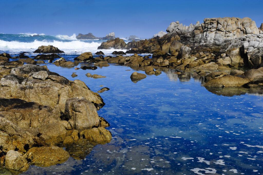 A tide pool in Pacific Grove, California.