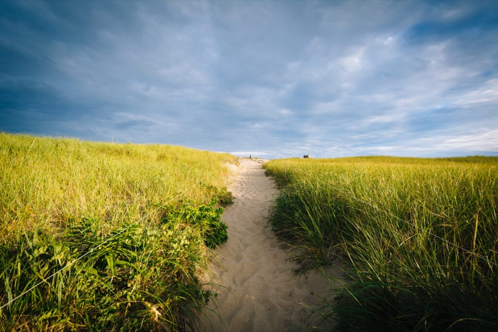 A trail at Race Point in Cape Cod National Seashore.