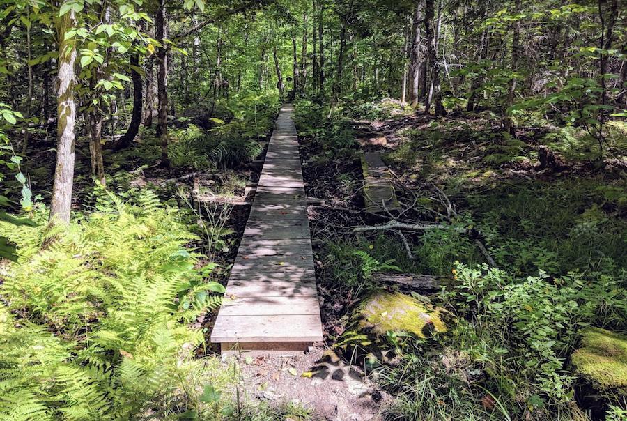 A trail in Aroostook State Park in Presque Isle, Maine.