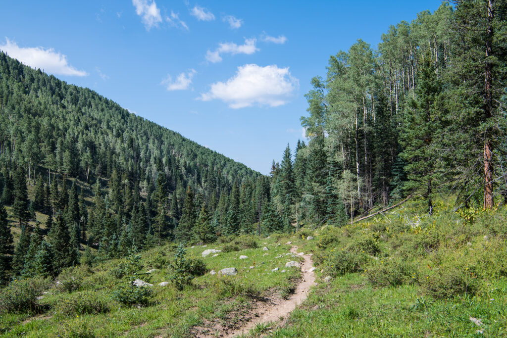 A trail in Carson National Forest in New Mexico.