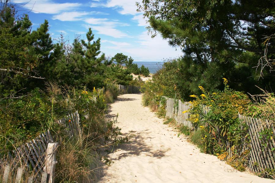 A trail in Delaware's Cape Henlopen State Park.