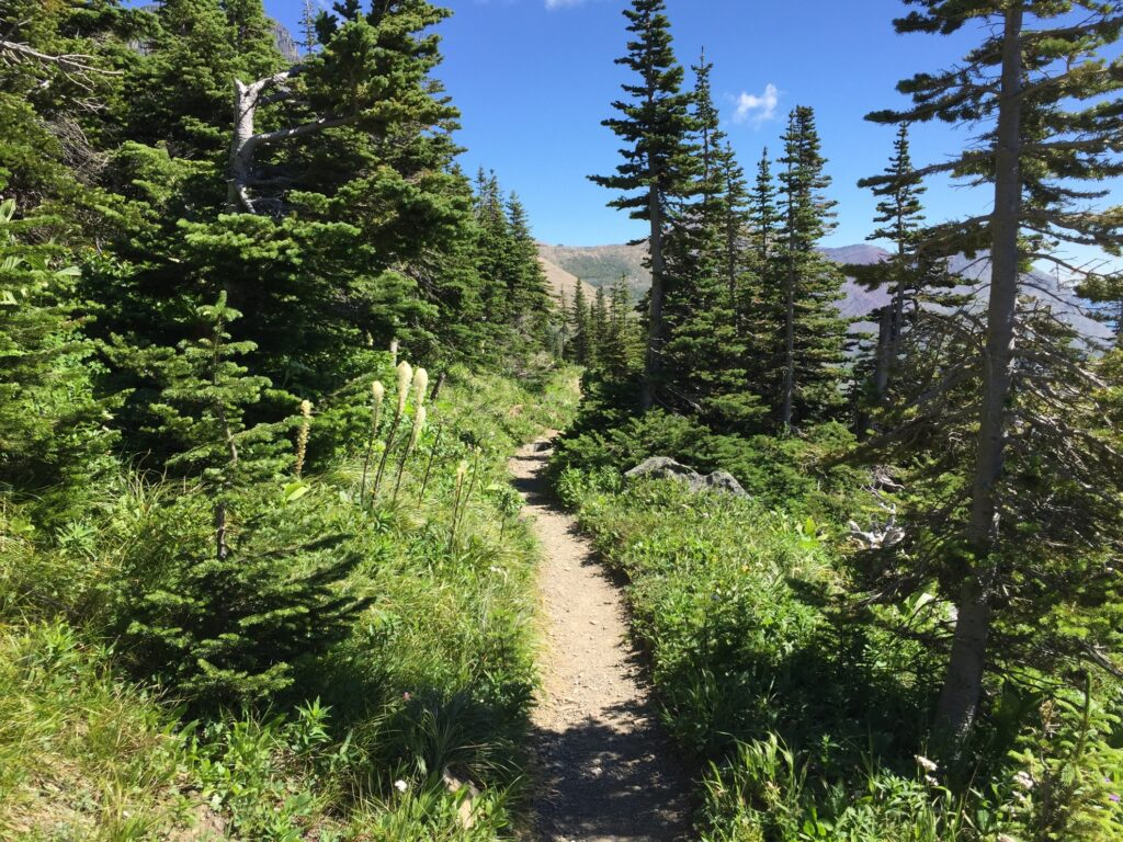 A trail in Glacier National Park.