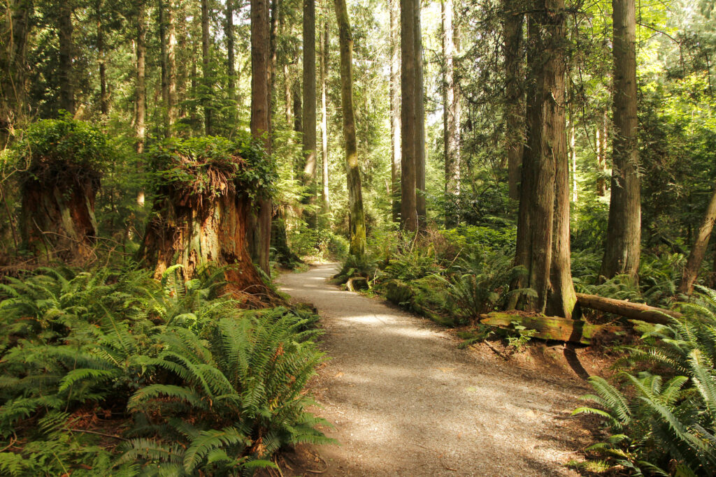 A trail in Pacific Sprit Regional Park.