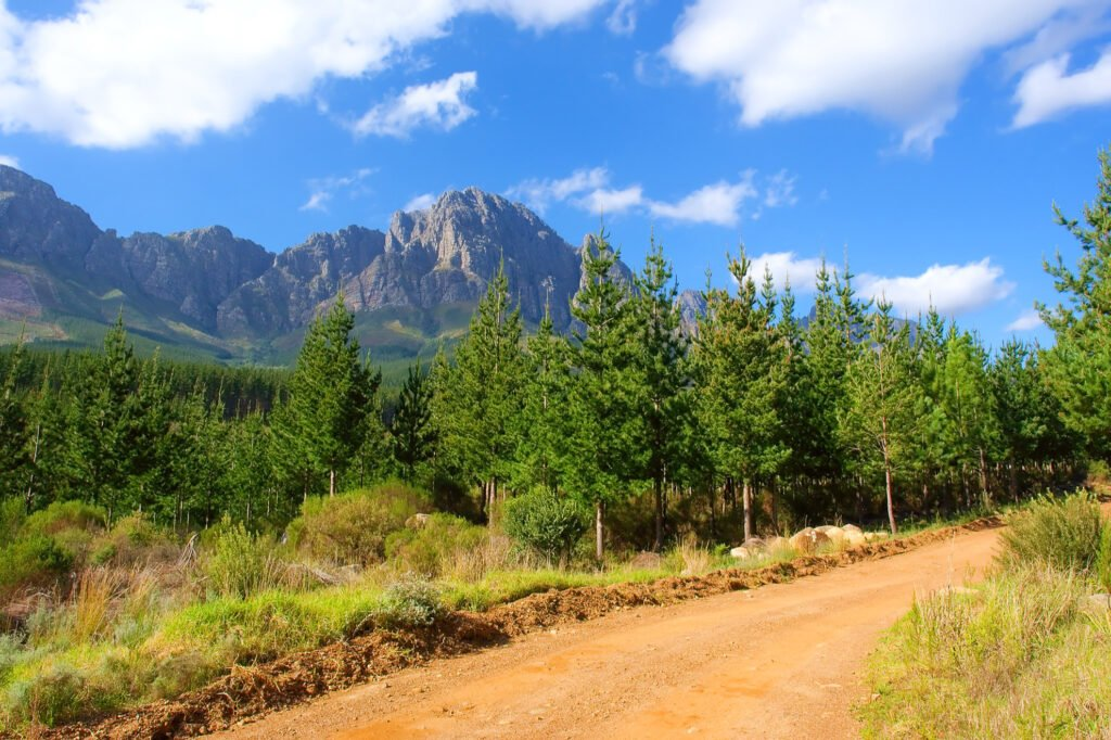A trail in the Jonkershoek Nature Reserve.