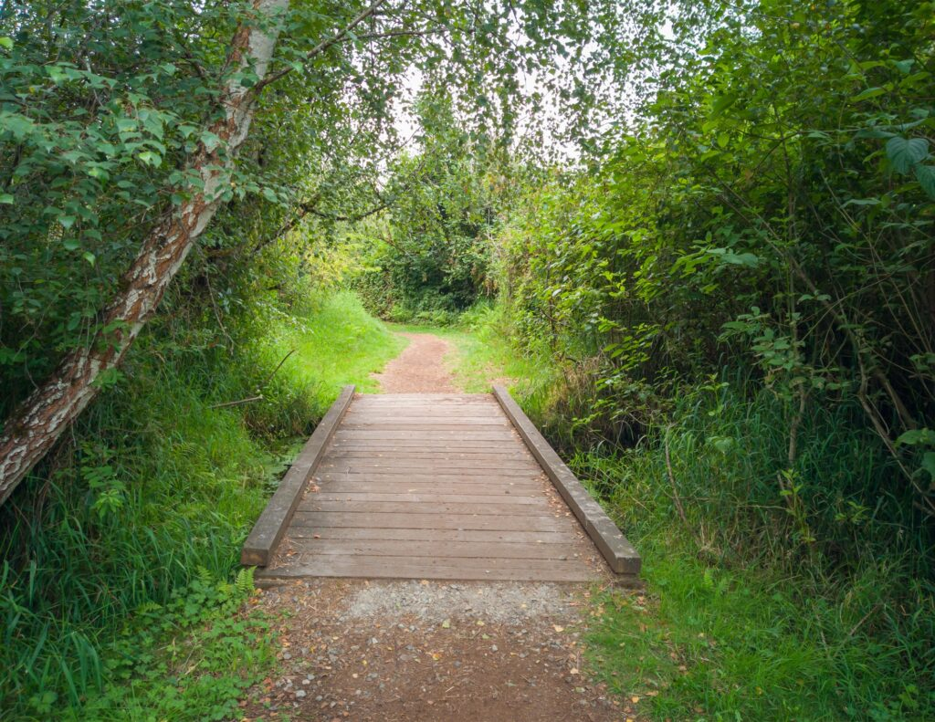 A trail in the Mercer Slough Nature Park.