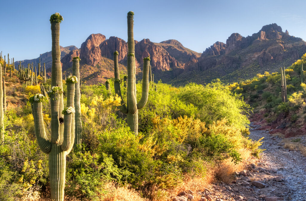 A trail in the Superstition Wilderness.