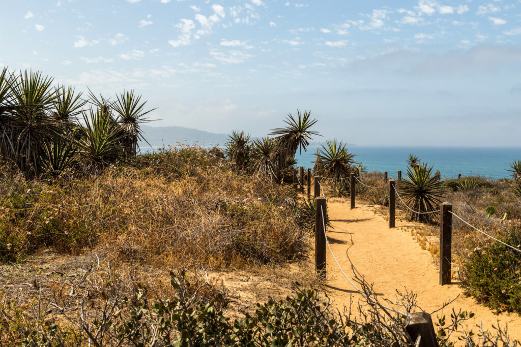 A trail in the Torrey Pines State Natural Reserve.