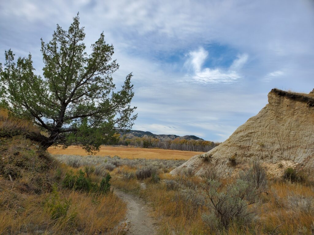 A trail in Theodore Roosevelt National Park's North Unit.