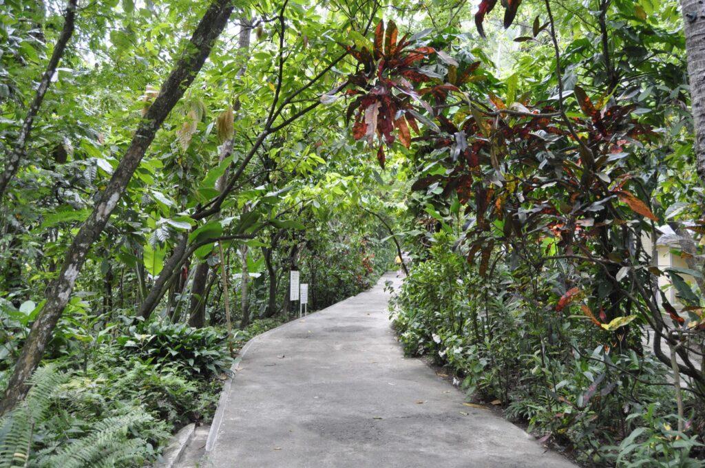 A trail leading into the Saint Lucia rainforest.