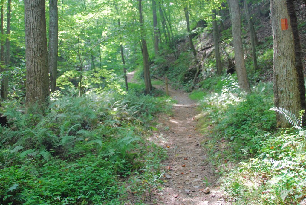 A trail through Fairy Stone State Park.