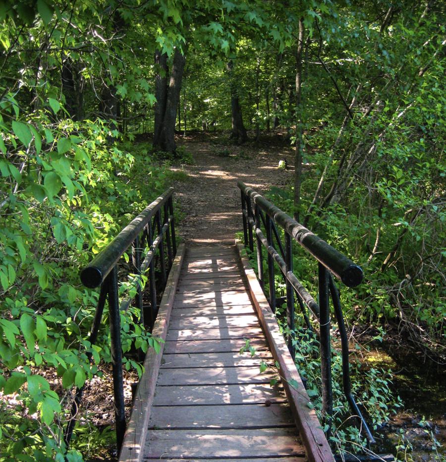 A trail through High Rock Park in New York.